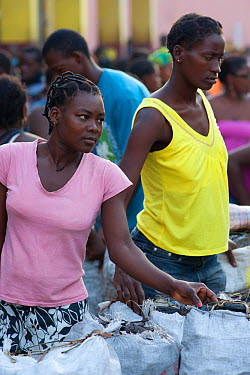 Women primarily control the sale of charcoal in Sao Tome market, Sao Tome, Democratic Republic of Sao Tome and Principe, Gulf of Guinea Lack of cooking fuels puts pressure on natural resources and muc...  -  Jabruson/ npl
