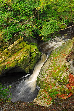 River Shimna, Tollymore Forest Park, Newcastle County Down, Ireland, September 2012  -  Robert Thompson/ npl