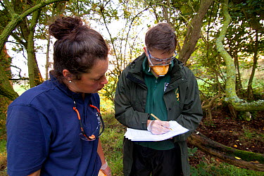 Badger (Meles meles) bovine tuberculosis vaccination team from Cheshire Wildlife Trust and Shropshire Wildlife Trust Details are kept of all traps that have been tripped, and basic health checks are n...  -  Tom Marshall/ npl