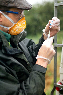 Badger (Meles meles) bovine tuberculosis vaccinator preparing syringe for vaccination in the rain at rear of vehicle Protective clothing is worn to protect both badger and vaccinator Cheshire, Shropsh...  -  Tom Marshall/ npl