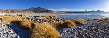 Los Flamencos National Reserve, the altiplano at an altitude of over 4000m looking over the salt lake Laguna de Tuyajto, Atacama Desert, Antofagasta Region, Norte Grande, Chile 2008  -  Gavin Hellier/ npl