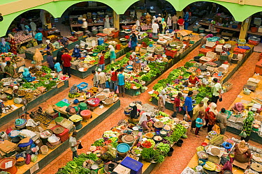 View over women selling fruit and vegetables in the towns central market, Kota Bharu, Kelantan State, Malaysia 2008  -  Gavin Hellier/ npl
