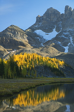Autumn larches reflected in Gog Lake, below The Towers Mt Assiniboine Provincial Park, British Columbia, Canada, September 2012  -  Kevin Schafer/ npl