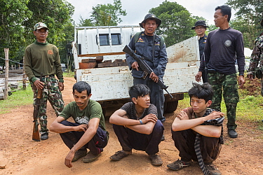 Siam rosewood tree poachers caught by anti-poaching patrol, Thap Lan national park, Thap Lan National Park, Dong Phayayen-Khao Yai Forest Complex, eastern Thailand, August, 2014  -  Ann & Steve Toon/ npl