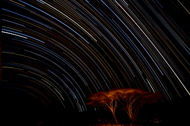 Stars draw traces above Naabi Hill acacia trees, Serengeti National Park, Tanzania