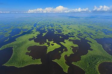 Aerial view over subtropical mangrove wetlands of the Everglades National Park. Florida, USA, February 2012.