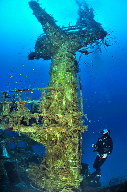 Diver exploring the wreck of the P29 patrol boat scuttled as an artificial dive site in August 2007. Wreck covered in algae and invertebrates and surrounded by fish. Malta, Mediterranean Sea. June 201...