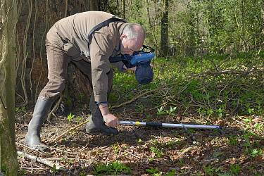 Keith Cohen using a radiotracker to locate a radio-collared Edible / Fat Dormouse (Glis glis) hibernating in its underground burrow in woodland where this European species has become naturalised, Buck...