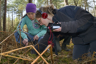 Jia Ming Lim and Dani Rozycka using a radiotracking cable to pinpoint a radio-collared Edible / Fat Dormouse (Glis glis) hibernating in its underground burrow in woodland where this European species h...