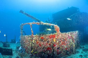 Barjacks (Caranx ruber), Yellowtail snapper (Ocyurus chrysurus), and Sergeant major damselfish (Abudefduf saxatilis) swimming around wreck of bow gun on C-58 shipwreck off Puerto Morelos, near Cancun,...