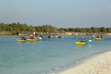 Kayakers along a  mangrove creek, Abu Dhabi, UAE. March 2010.