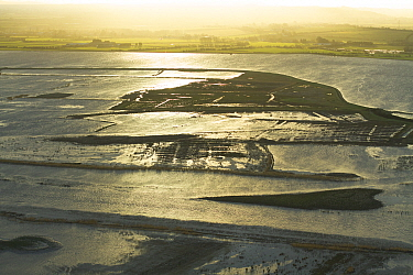 Aerial view of Steart Marshes Wildfowl and Wetland Trust, agricultural land transformed into wetland reserve, at sunrise, Somerset, UK, February 2015.   This area has been allowed to flood by the WWT...