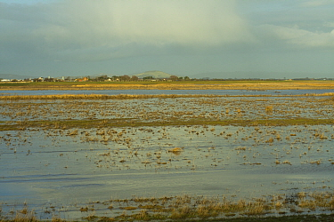 Steart Marshes Wildfowl and Wetland Trust Nature Reserve, agricultural land transformed into wetland reserve, Somerset, UK, February 2015.  This area has been allowed to flood by the WWT and the Envir...