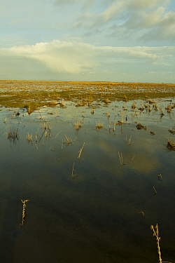 Steart Marshes Wildfowl and Wetland Trust Nature Reserve, agricultural land transformed into wetland reserve, Somerset, UK, February 2015.   This area has been allowed to flood by the WWT and the Envi...