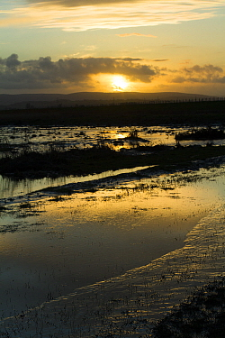 Sunset over Steart Marshes Wildfowl and Wetland Trust Nature Reserve, agricultural land transformed into wetland reserve, Somerset, UK, February 2015.  This area has been allowed to flood by the WWT a...