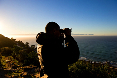 Shark spotter looking out to sea on the side of mountain above Kalk Bay, False Bay, near Cape Town, Western Cape, South Africa. July 2013.