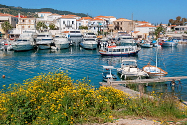 View of the old small harbor of the island of Spetses. On the right hand side there are a couple of Greek fishing boats called caique. But the majority of docking spots are occupied nowadays by luxury...