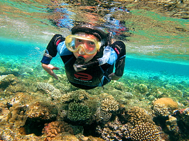 Young boy snorkelling over hard corals (reef-building corals) Sharm el Sheikh, Red Sea, Egypt, October 2010. Model released