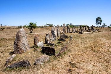 Megalith stelae field, Tiya archaeological site UNESCO World Heritage Site, Soddo Region, Ethiopia. February 2009.