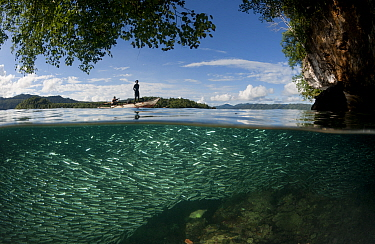 Schooling silversides (Atheriniformes) split level with karst limestone cliff and West Papuan fishermen in their dugout outrigger canoe. Raja Ampat, Indonesia. Second Place in the Portfolio Award of t...