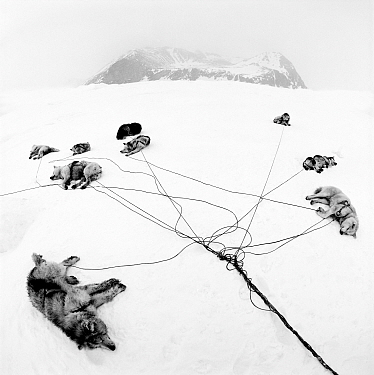 Inuit sled dogs resting, near Ittoqortoormiit, Scoresbysund, Greenland. Second Prize in the Nature category of the Spider Black and White Photography Competition 2015.