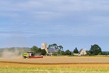 Combine harvester in field of wheat. Gunthorpe, UK, August 2014.