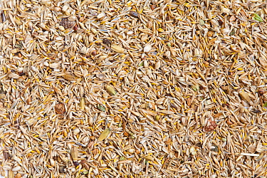 Wildflower meadow seed mix for chalk and limestone soils (20% wildflowers, 80% grasses) including Sheep's fescue (Festuca ovina), and Crested dogstail (Cynosurus cristatus).