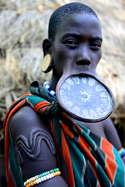 Woman with lip plate, which signifies she is a married woman, she also has traditional scarification on her arm, Mursi tribe, Mago National Park. Ethiopia, November 2014