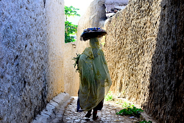 Muslim woman walking down narrow streets, Harar, an important holy city in the Islamic faith, UNESCO World Heritage Site. Ethiopia, November 2014