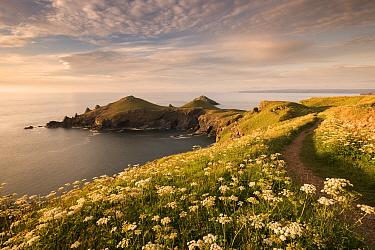 The Rumps, Pentire Head, late evening light with the Devon Coastal Path, Polzeath, Cornwall, UK. June 2015.