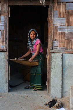Apatani winnowing rice using Yapyo made of bamboo, Apatani Tribe, Ziro Valley, Himalayan Foothills, Arunachal Pradesh.North East India, November 2014.