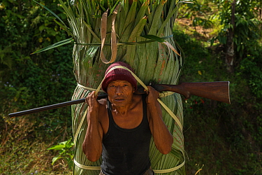 Konyak Naga woman carrying palm leaves to be used for roofing. Mon district. Nagaland,  North East India, October 2014.