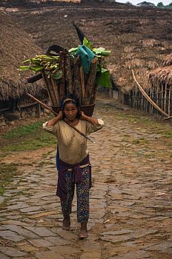 Chang Naga woman carrying firewood,  Tuensang district. Nagaland, North East India, October 2014.