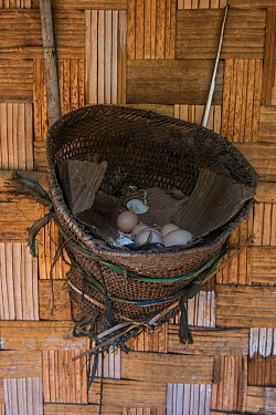 Chicken nesting basket with eggs, Chang Naga Tribe. Tuensang district. Nagaland, North East India, October 2014.