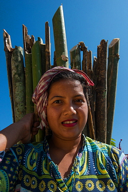Ao Naga woman carrying firewood, Mokokchung district. Nagaland, North East India, October 2014.