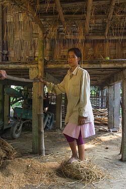 Mising tribe woman threshing rice by foot, Majuli Island, Brahmaputra River, Assam, North East India, October 2014.