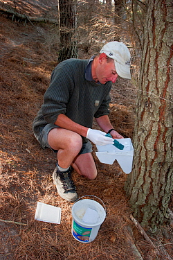 Ranger restocking a poison bait station with bait used to control rodents and Brush-tailed possums (Trichosurus vulpecula) in an intensively managed sanctuary where native bird species are being reint...