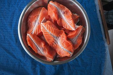 Chinook salmon (Oncorhynchus tshawytscha) ready  to be cooked.  Naknek River, Bristol Bay, Alaska, USA, June.