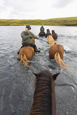 Horseback riders riding Icelandic horses across river, Iceland, August 2014.