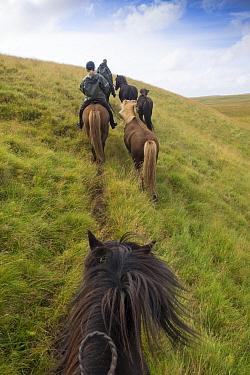 Horseback riders riding Icelandic horses, Iceland. August 2014.