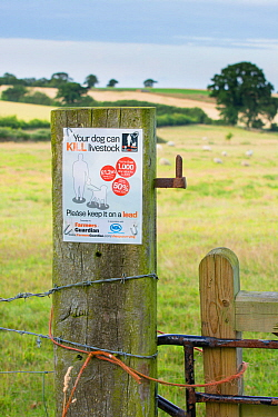 Farmers Guardian notice on field gatepost warning walkers that dogs can kill livestock, with sheep in distance. Norfolk, England UK. August.