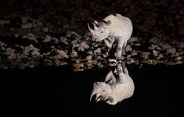 Black rhinoceros (Diceros bicornis) bull having a drink at night with perfect reflections. Etosha National Park, Namibia. Taken with Infrared camera.