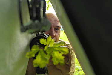 Nature photographer Solvin Zankl taking close up images from animals on oak leaves. Niedersachsische Elbtalaue Biosphere Reserve, Lower Saxonian Elbe Valley, Germany, June.