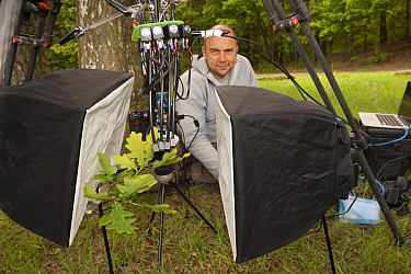 Nature photographer Solvin Zankl taking close up images from animals on Oak tree (Quercus) leaves. Niedersachsische Elbtalaue Biosphere Reserve, Lower Saxonian Elbe Valley, Germany, June 2013.