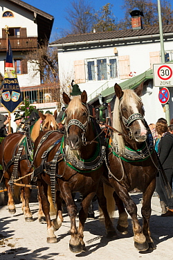 Carriage pulled by four horses parading during the Leonhardiritt or Leonhardifahrt, the traditional horse procession of St Leonard, in Bad Tolz, Upper Bavaria, Germany. November 2015