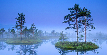 Moonrise over  misty bog in Estonia. June 2009.