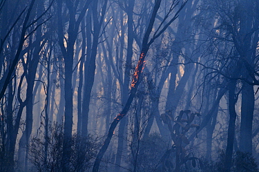 Aftermath of a bush fire near Charter Towers, Queensland, Australia