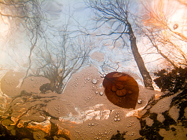 La Hoegne mountain stream in autumn, under water, near Hockai, Belgian Ardennes, November