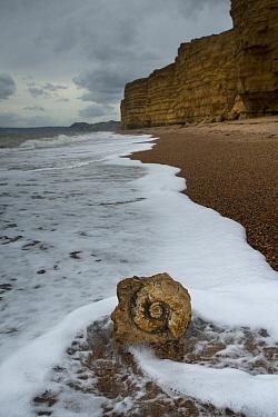 Jurassic ammonite on a beach, with the Jurassic Bridport Sandstone cliffs in the background, Jurassic Coast, Burton Bradstock, Dorset, March 2012