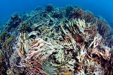 Dynamite blasted reef, near Taglibas, Danajon Bank, Central Visayas, Philippines, April 2013